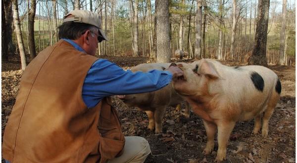 Timber Raised Pork